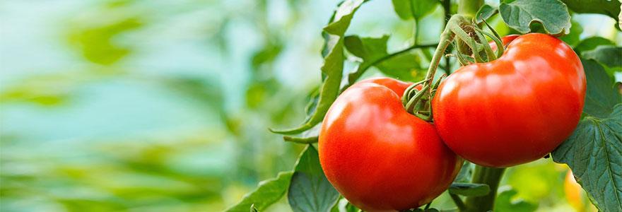 Cultiver-soi-meme-ses-tomates