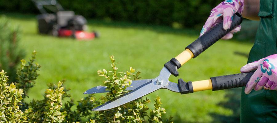 Prestataire spécialisé dans l'entretien de jardins